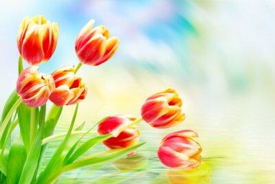 Картина Тюльпан цветы крупным планом