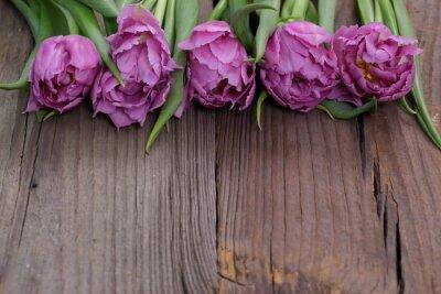 Картина tulipany