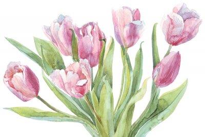Картина Тюльпаны акварель иллюстрации