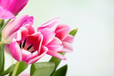 Картина цветок тюльпана
