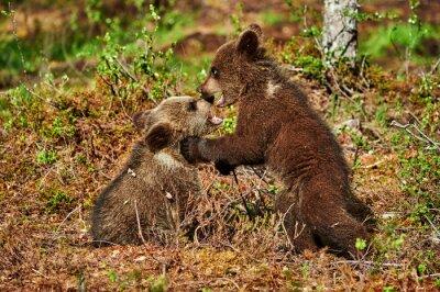 Картина Два бурых медвежат медведя