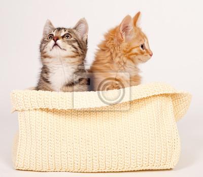 Две симпатичные котята
