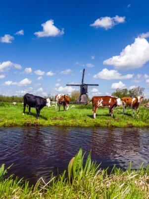 Картина Типичный голландский пейзаж с коровами на лугу и ветряная мельница возле воды