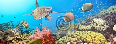 Подводный Панорама