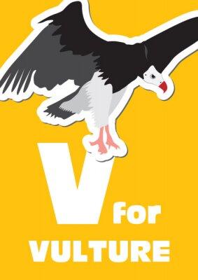 Картина В для Vulture, животного алфавита для детей