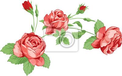 Векторная иллюстрация из роз в стиле винтаж