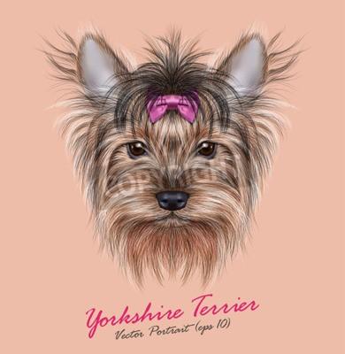 Картина Вектор Портрет домашней собаки. Симпатичные руководитель Йоркширский терьер на пинг фоне.