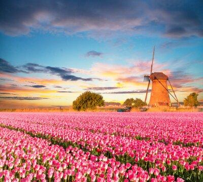 Картина Яркие тюльпаны поле с голландской ветряной мельницей