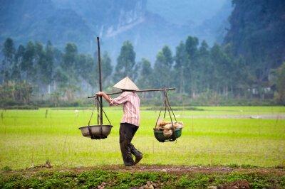Картина Вьетнамский фермер на рисовом поле рисовом в Ниньбинь, Там Кок. Органическое сельское хозяйство в Азии