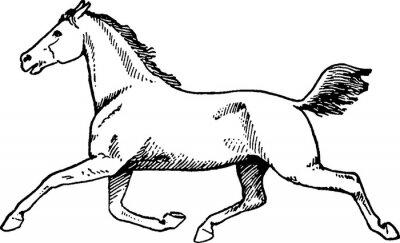 Картина Урожай рисунок лошади