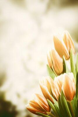 Картина Старинные открытки с тюльпан цветы