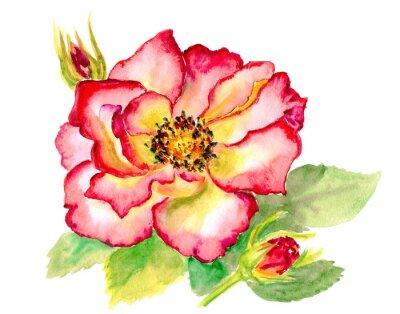 Картина Урожай акварель ярко-красная роза
