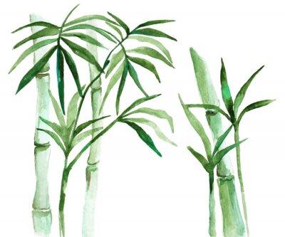 Картина Акварельные бамбуковые иллюстрации