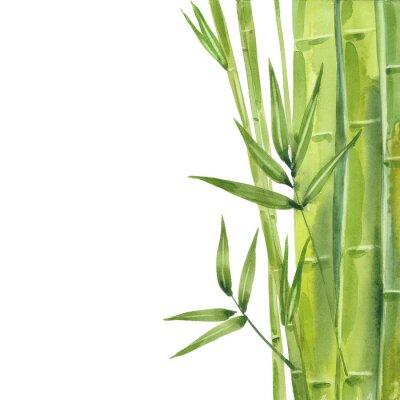 Картина watercolor bamboo stalks