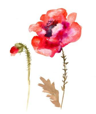 Картина Акварельный цветок мака