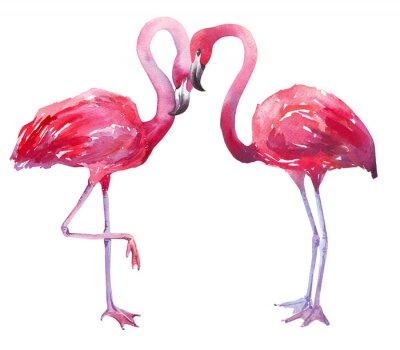 Картина акварель иллюстрации фламинго