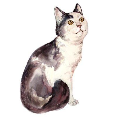 Картина Акварель иллюстрация уродливый кот смотрит путать
