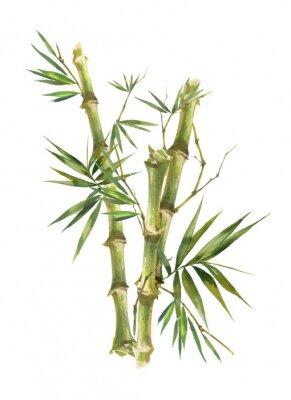 Картина Акварельные иллюстрации роспись листьев бамбука, на белом фоне