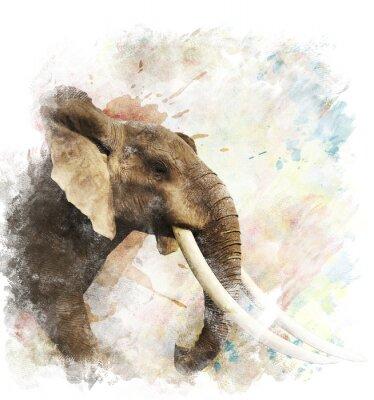 Картина Акварель Изображение Elephant