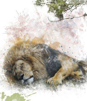Картина Акварель Изображение Спящий Лев