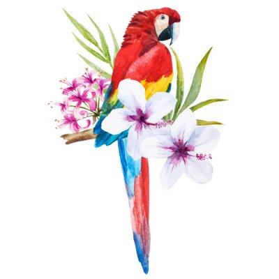 Картина Акварель попугай