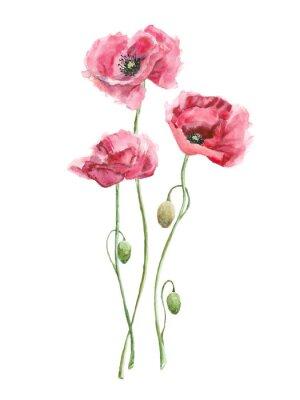 Картина акварель красные цветы (маки)