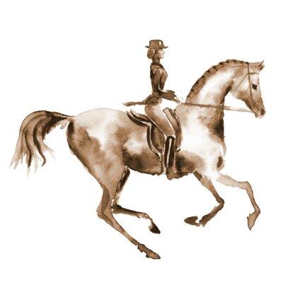 Картина Акварели всадника и выездке лошади на белом фоне. Конный спорт. Ручная роспись иллюстрации лошадиный фон.