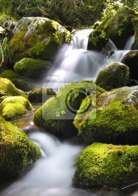 Cascada ан Muniellos.