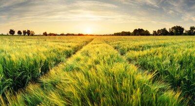 Картина Пшеничное поле пейзаж с пути в закат время