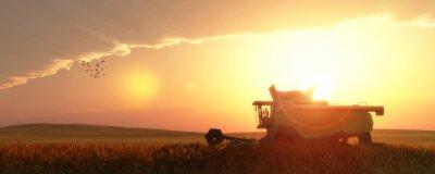 Картина wheat harvester