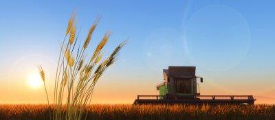 Картина комбайн пшеницы