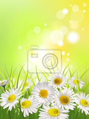 Картина Белые ромашки на лугу. Весна или лето фон.