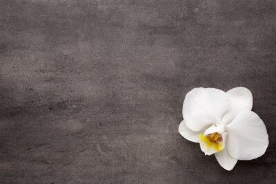Картина Белая орхидея на сером фоне.