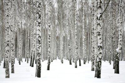Картина Winter birch forest