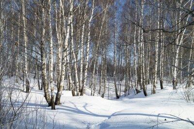 Картина Зимний пейзаж с белой березы
