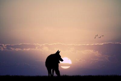 Картина wolf at sunset