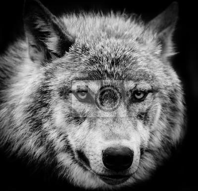 Картина Волк глаза черно-белая голова выстрел из серого волка.