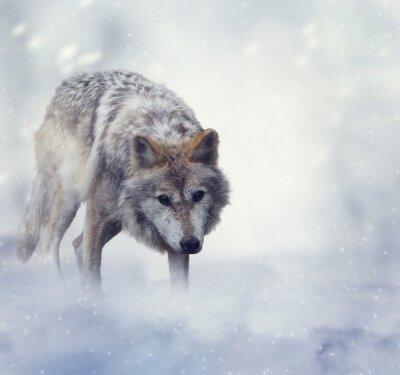 Картина Волк в зимнее время