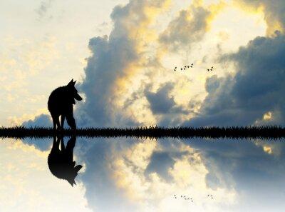 Картина волк на реке на закате