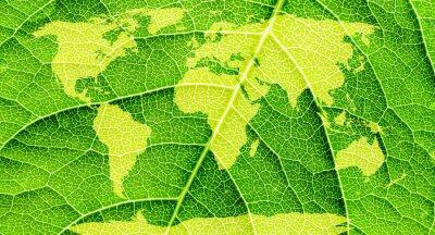 Картина Карта мира, континенты в зеленом фоне листьев.