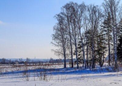 Картина Большие березы отбрасывают тень на заснеженное поле