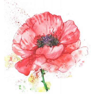 Картина красный цветок, мак, иллюстрация акварелью