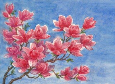 Картина Акварель, цветущая магнолия.