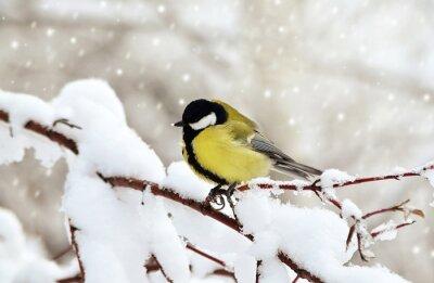 Картина Синица зимой.