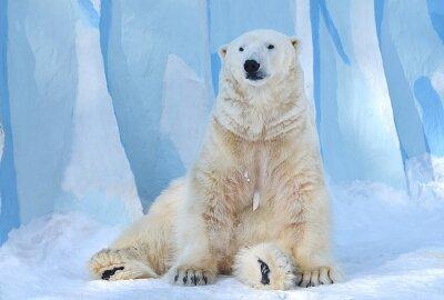 Картина Белый медведь.