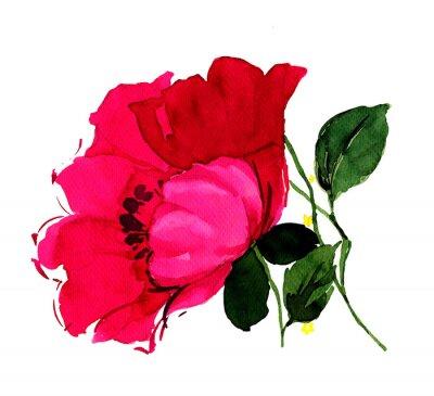 Картина 아름다운 진홍 의 양귀비