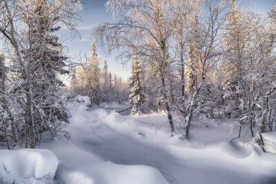 Картина зимняя лесотундра