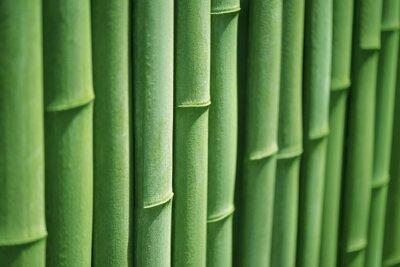 Картина Бамбук линия
