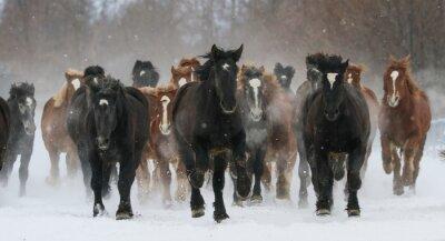 Картина 雪原 を 走 る 馬
