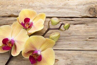 Картина Желтый цвет орхидеи.